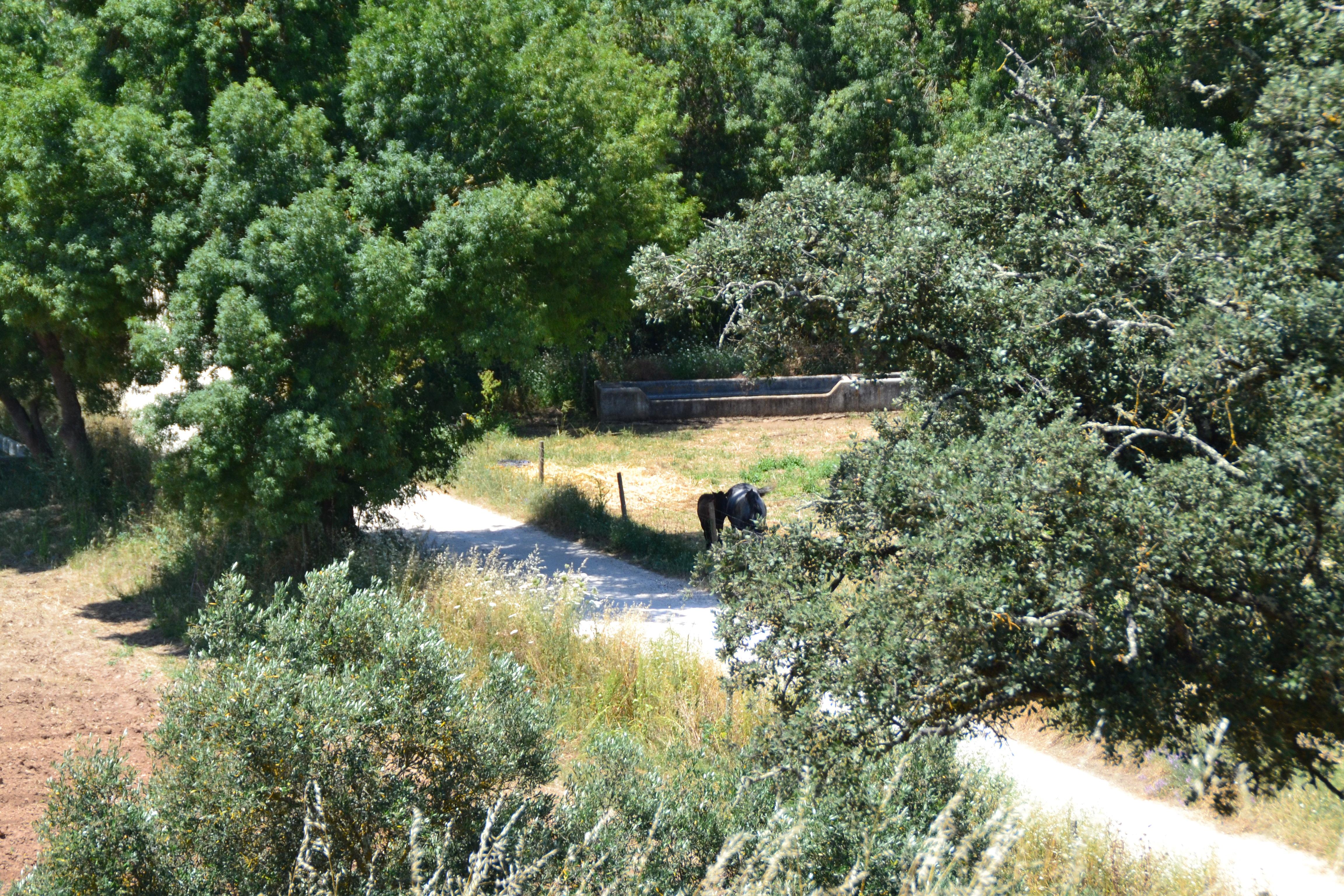 A vida no campo: um remédio natural