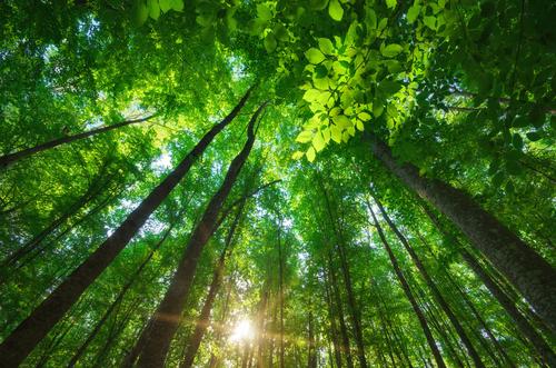 Mucizeleri Görmek İçin Doğaya Bakmaya Ne Dersiniz?